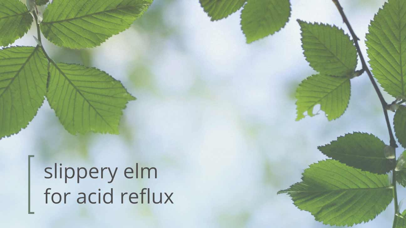 slippery elm for acid reflux