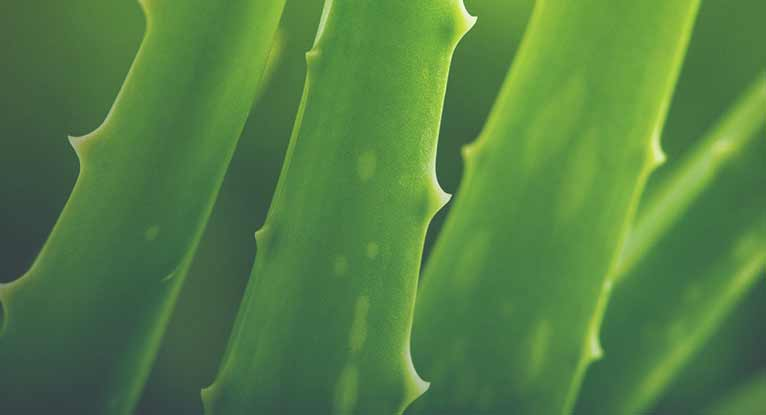 Can You Use Aloe Vera Juice to Treat Acid Reflux?