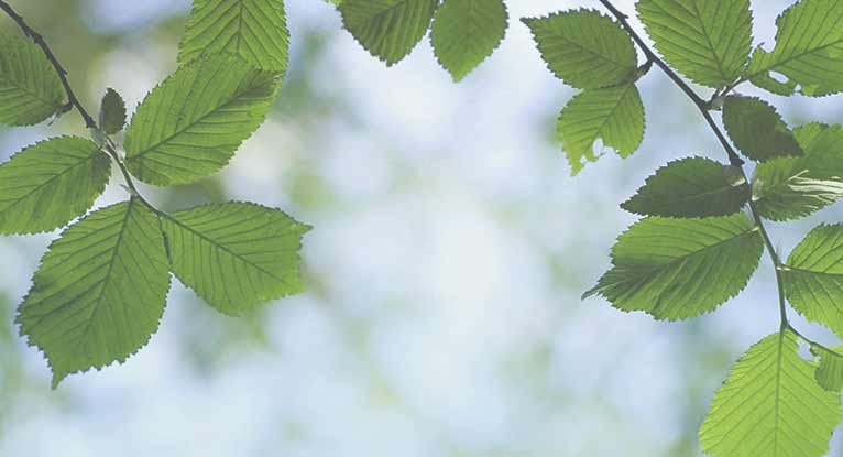 Can You Use Slippery Elm to Treat Acid Reflux?
