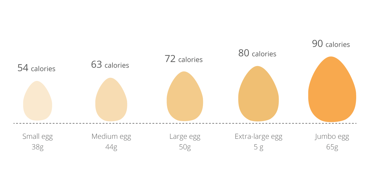 How much protein is in one egg 2