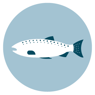10 best types of fish to eat carolina meat fish co for Healthiest types of fish