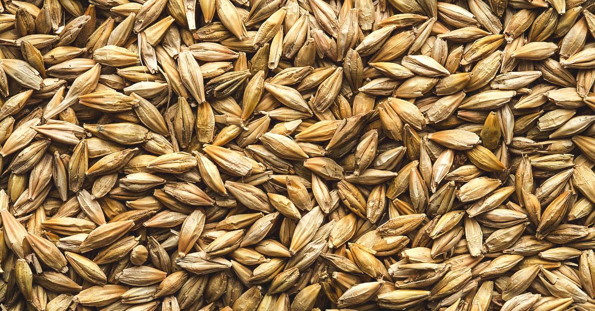 Gluten Free Cereal >> Is Barley Gluten-Free?
