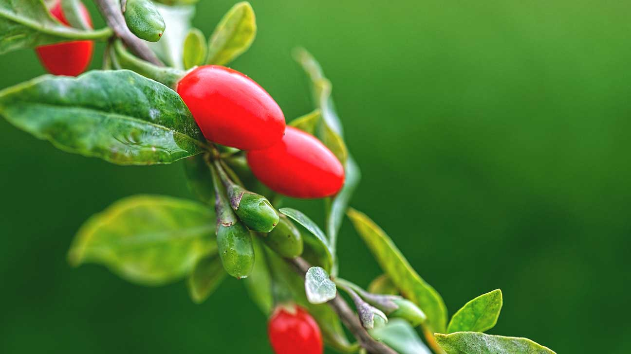 healthy facts about the goji berry, Beautiful flower