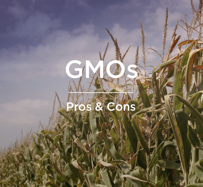 pros cons of gmos
