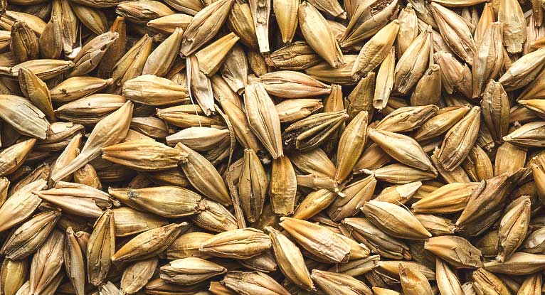 Is Barley Gluten-Free?