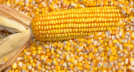 GMOs: Pros and Cons