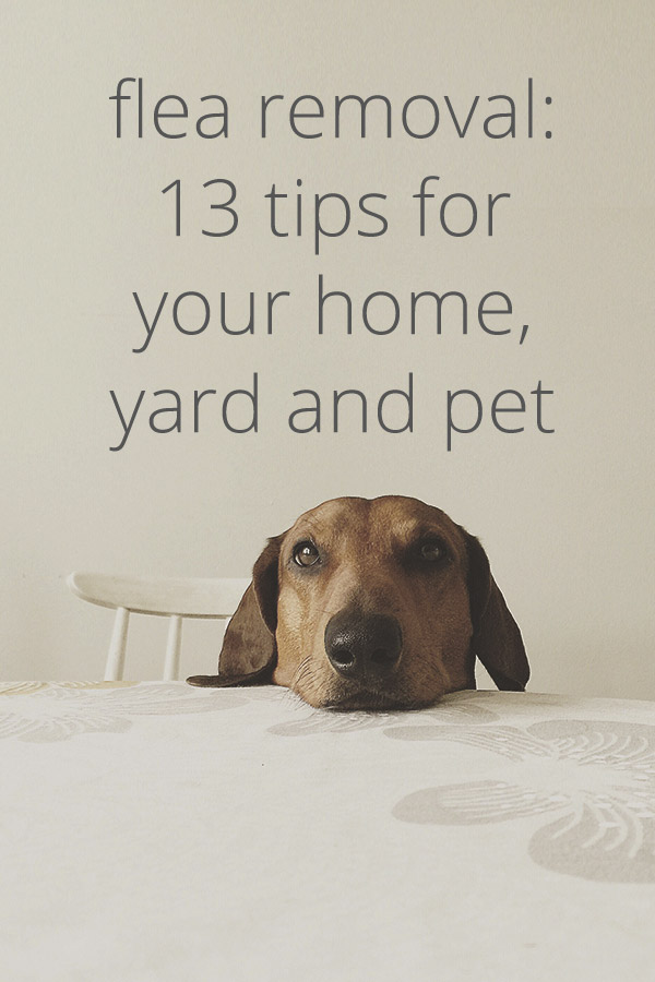 How To Get Rid Of Fleas 13 Tips