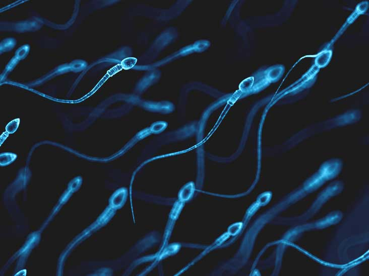 Sperm dying after 24 hours