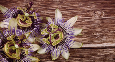 The Calming Effects of Passionflower