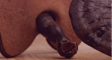 Reishi Mushroom: The Key to Immortality?