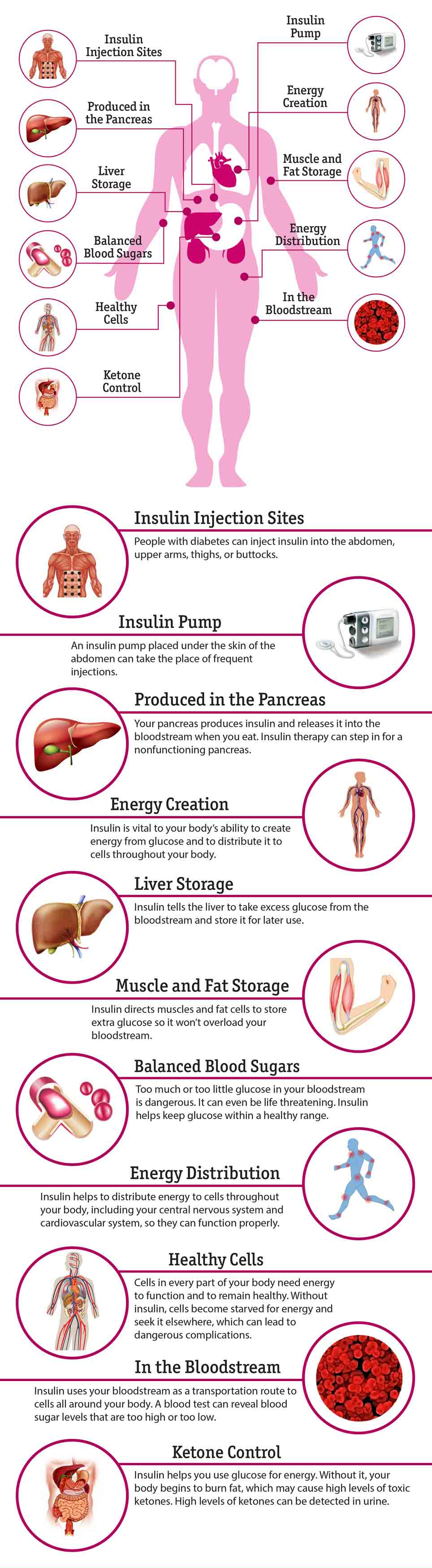 11 Effects Of Insulin On The Body