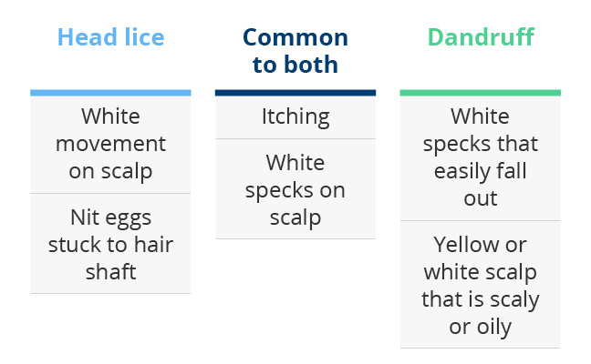 Lice vs dandruff how do i tell the difference lice and dandruff ccuart Images