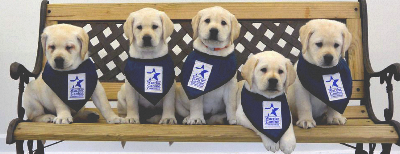 service puppies for veterans