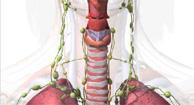 Lymph nodes BodyMaps