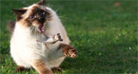 7 Ways Cats Could Save Your Life