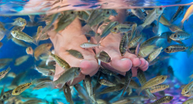 Is Fish Therapy an Effective Treatment for Psoriasis?