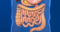 graphic of digestive system
