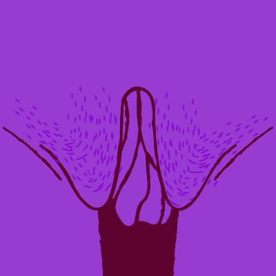 lopsided vagina