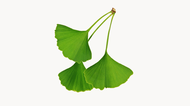 Can Gingko Prevent Alzheimer's?