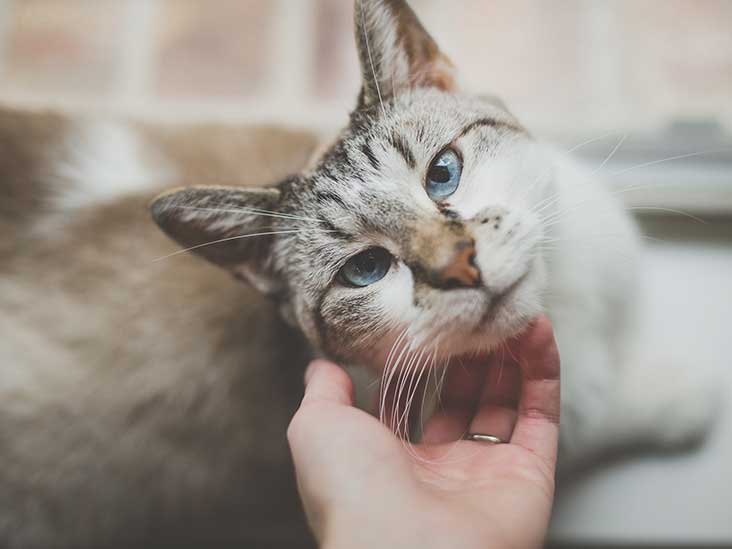 What I Learned About My Depression After Helping My Cat Conquer His