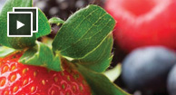 anti-inflammatory osteoarthritis diet