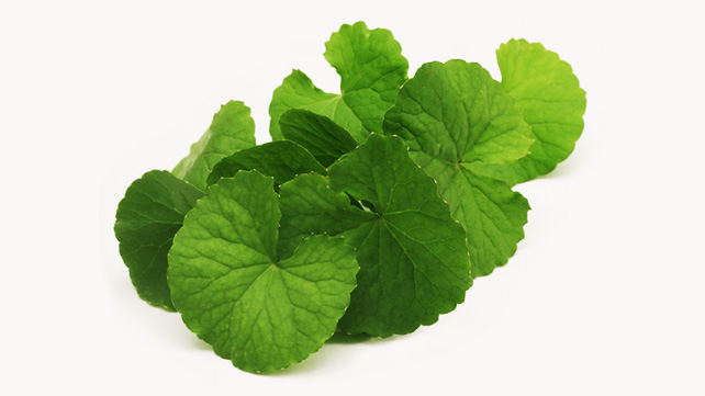 Gotu Kola The Cure for Varicose Veins
