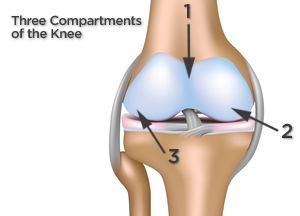 three compartments of the knee