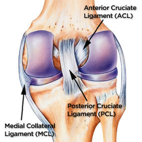 sports injuries posterior cruciate ligament tear essay Free essay: anterior cruciate ligament with an ever increasing number of  people  anterior cruciate ligament injury in football player essay examples.